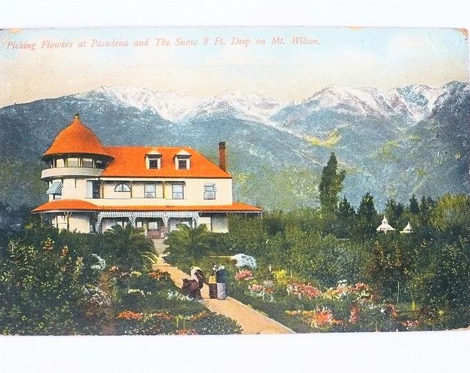 1908 California Picking Flowers Pasadena Snow Mount Wilson Vintage Postcard Posted