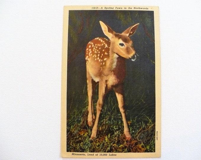 1949 Spotted Fawn Deer Northwoods Minnesota Vintage Postcard Posted