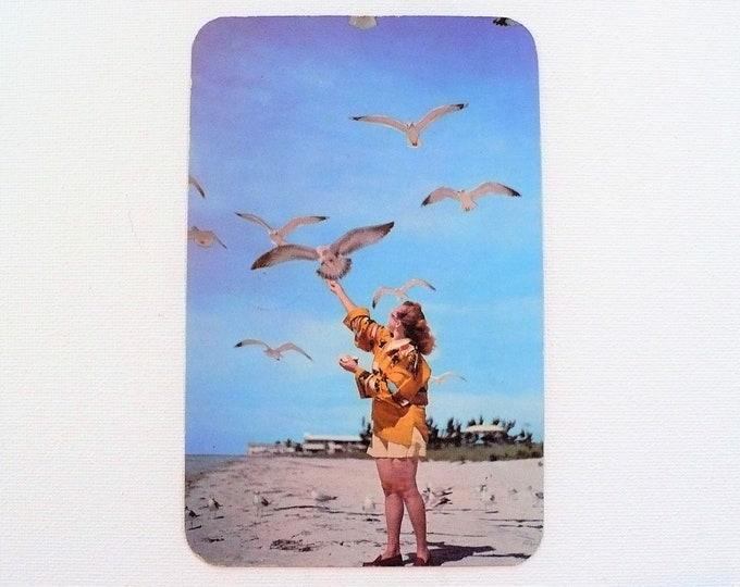 1952 Feeding Sea Gulls St Petersburg Florida Rounded Corner