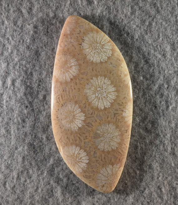 Wholesale Mix Lot AAA Quality Natural Indonesian Yellow Fossil Coral Cabochons Wholesale Mix Lot Smooth Fossil Coral Cabochon Smooth Lot