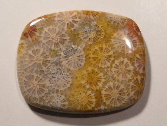 Agate corail fossile de la cabine...     x    46 x  37 x 5,6 mm...            B3607 82ad7f