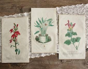 3 Antique 19th c. Hand Colored Floral Botanical Prints