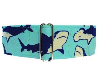 Shark Martingale Collar, 2 Inch Martingale Collar, Shark Dog Collar, 1.5 Inch Dog Collar, 2 Inch Dog Collar, Aqua Dog Collar Aqua Martingale