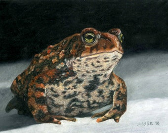 Thoughtful Toad Giclee Print on Paper - 5x7 matted to 8x10