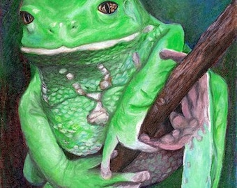 Waxy Monkey Tree Frog Giclee Print 5 by 7 inches - matted to 8x10