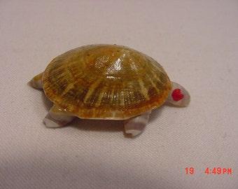 Vintage Real Seashell Turtle Brooch   16 - 552