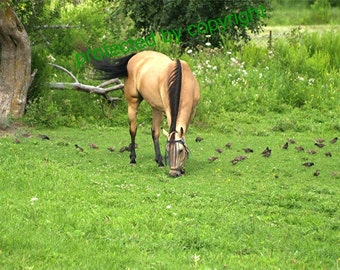 Horse photograph card, Dinner With Friends - horse and birds, write your own msg, buckskin, sparrows, meadow - under 5