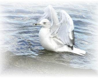 Dreamy Seagull - bird art card, blank 5 x 7, write own msg, bird lovers card, feathers, bird, water, wings, blue, white, flight,