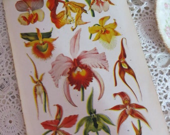 Book of Garden Flowers-Reference-Audubon-Book Plates-IRIS