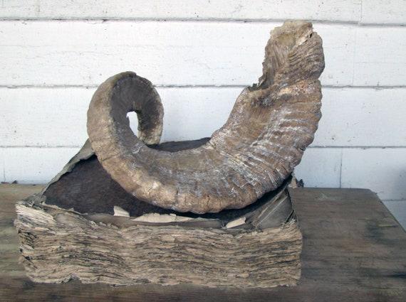 vintage ram s horn large rustic horn etsy vintage ram s horn large rustic horn