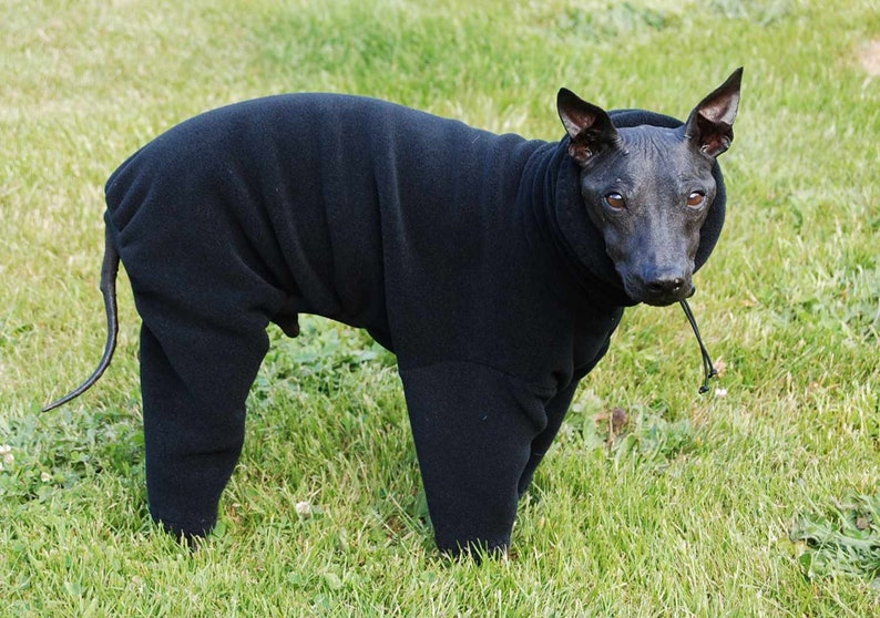 Fleece Polartec 200* Dusty Rust*  with Optional Head Covering Snood wtoggle or Turtlenck for Italian Greyhounds and all small dogs.
