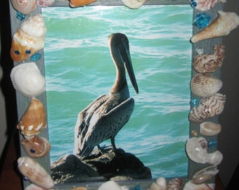Pelican Photography decorated with Sea Shells