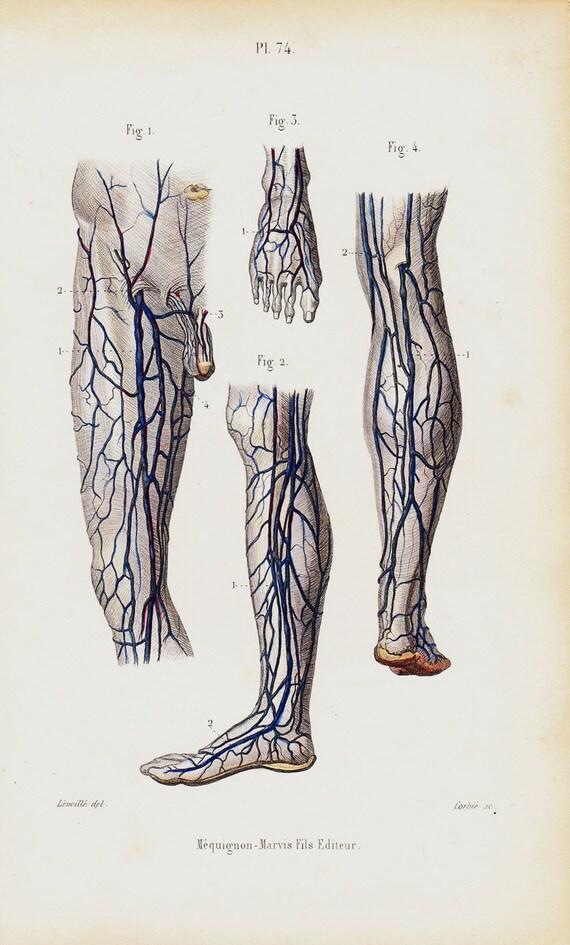 1843 Antique Anatomy Print Leg Arm Foot Veins Foot Etsy