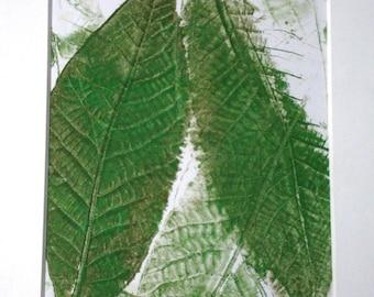Shag-bark Hickory Leaf Print
