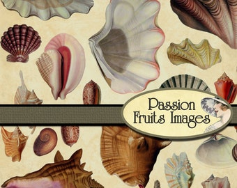 Assorted Shells Murex Two Reef Rock Specimens Sea Shell Assortment Carrier Shell Spider Conch 7 Shells Whelk Shell Collecting Cones