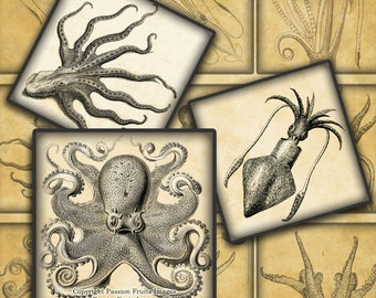 """Antique Octopus and Squid digital collage sheet - 2"""" Squares-- Instant Download"""