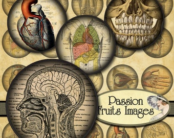 1.5 inch rounds  Antique Anatomical Drawings Digital Collage Sheet--Instant Download