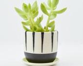 Mini Porcelain Hand Painted Succulent Planter with Drain Dish