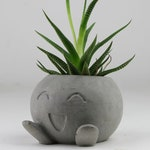 Concrete Oddish  Planter, Air Plant Holder, Succulent Planter, Pokemon Planter