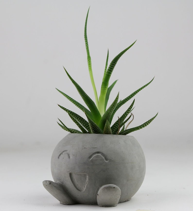 Concrete Oddish  Planter Air Plant Holder Succulent Planter image 0