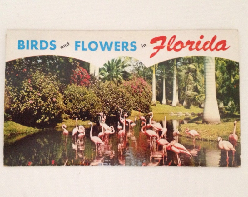 Vintage Florida Postcard 1956 Picturamic Curt Teich Flowers image 0