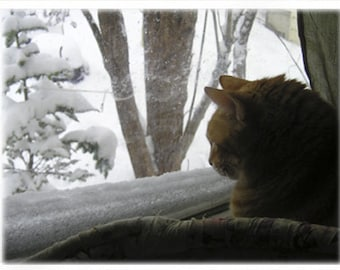 Ginger Boy Tucker in Winter - Special needs feline, blank note card, indoor bird watching, orange ginger cat