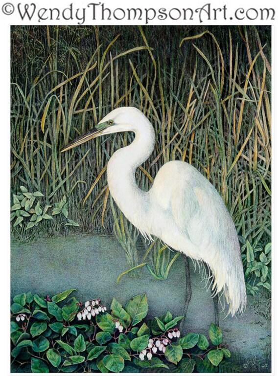 White Egret Bird Colored Pencil