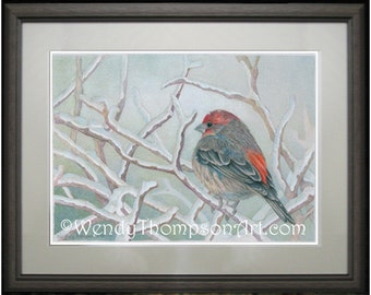 Red Finch in Winter ~ Open edition print from original colored pencil drawings ~ Fine detailed Nature art, birds, home decor, soft winter.