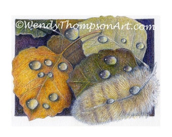 Amber Rain ~ Feathers with water drops, Autumn leaves, rain drops, amber colors wildlife bird feathers, aspen tree leaves with water drops