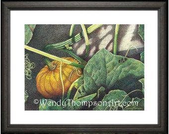 Autumn Pumpkin with vines ~ Open edition print from original colored pencil drawings ~ detailed Nature art, home decor, vines and twine.