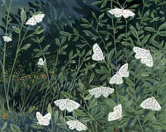moon moths