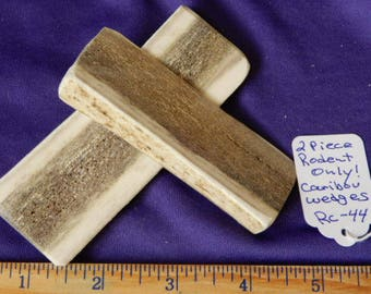2 Piece  RODENT ONLY Small Caribou Beam Wedges Antler, RC-44