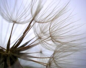 Dandelion Photography Neutral Soft Home Decor 10x8 Print Dandelion Part Blown...