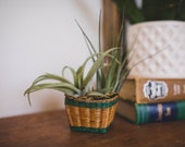 Vintage Mini Wicker Basket with two LIVE air plants, air plant decor, gift for women, gift for plant lady, Gift for friend,