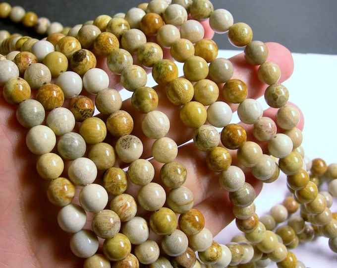 Fossilized Coral  - 8mm beads - full strand - 48 pcs - RFG574