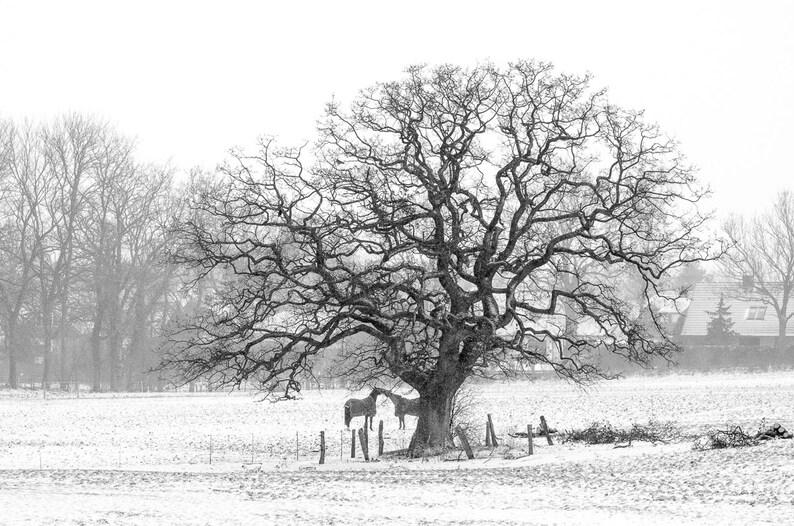 Winter Tree  Fine Art Photography Print image 0