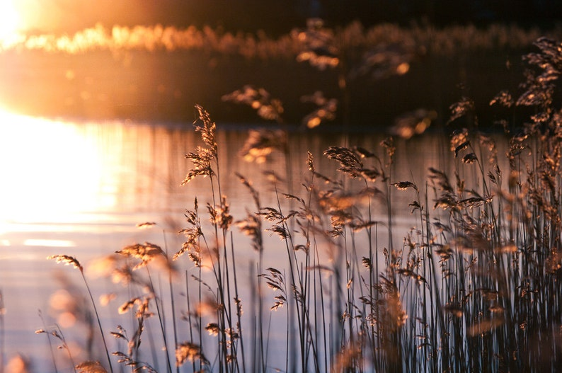 Morning at the Schlei  Fine Art Landscape Photography Print image 0