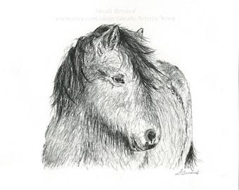 "ORIGINAL Charcoal Drawing ""Icelandic Horse"" by Colorado Artist Sarah Marie Bevard"