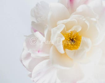 Airy Floral Photography - Peony Abstract - nature photography, flower, feminine, light, white, yellow, pink, spring, blush