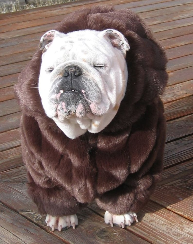 ORDER ENGLISH BULLDOG faux Mink Fur Coat Bulldog Custom Pattern