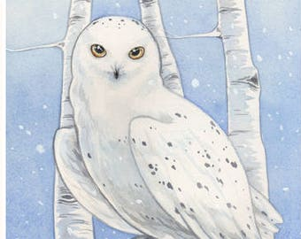 Snowy Owl Print (Matted)