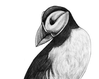 Puffin Original Pencil Animal Sea Bird Drawing - 115