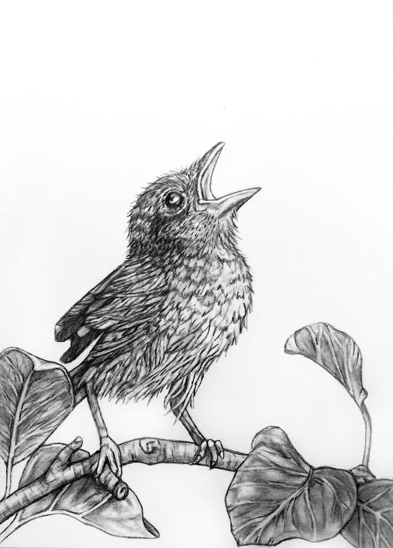 Ptak Rysunek Oryginalny Ołówek Ilustracja 72 Singing Bird Etsy