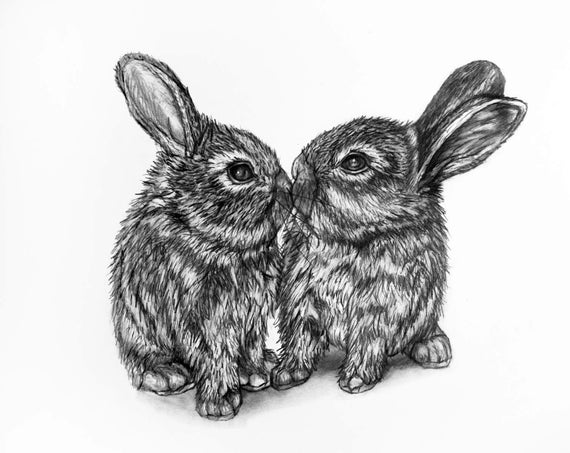 Bunny Rabbit Pencil Drawing 1 Bunny Kiss Etsy