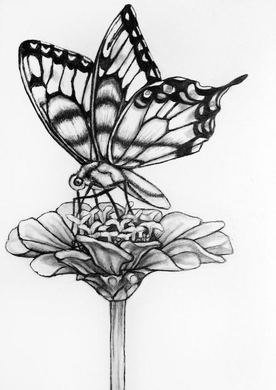 Flor De Mariposa Original Lápiz Dibujo Mariposa 71 Etsy