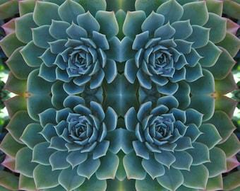 Succulent Kaleidoscope Digital Print