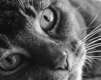 Lazy Cat Digital Print