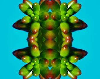 Frog Plant Kaleidoscope Digital Print