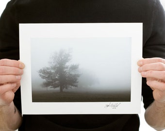 Fog Tree in a Field Photograph (9 x 6 inch Fine Art Print) Nature Photography