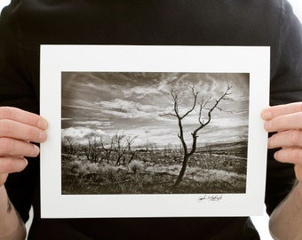 Lone Burnt Tree Photograph (9 x 6 inch Fine Art Print) Black and White Landscape & Nature Photography